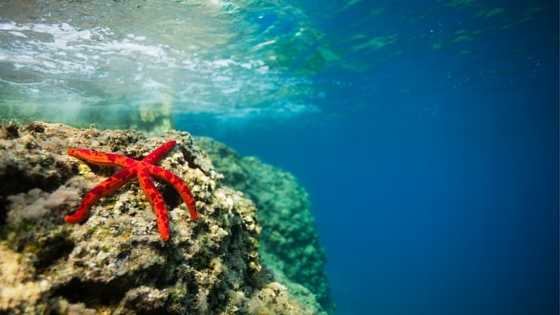 In the Sea of Unworthiness, You're a Starfish!
